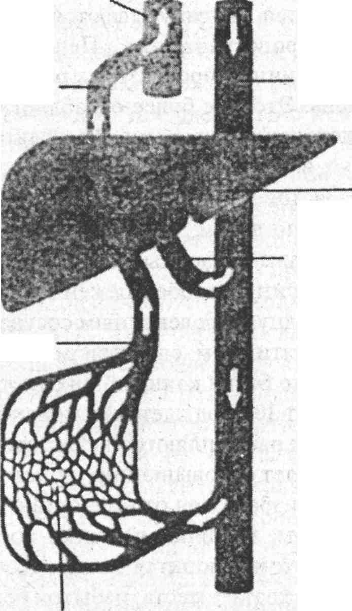 очищение кишечника пшеном отзывы
