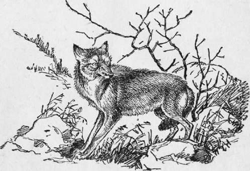 Охота на хищных зверей